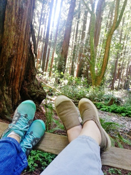 What to expect from Muir Woods