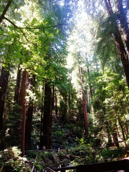 Is Muir Woods worth seeing?