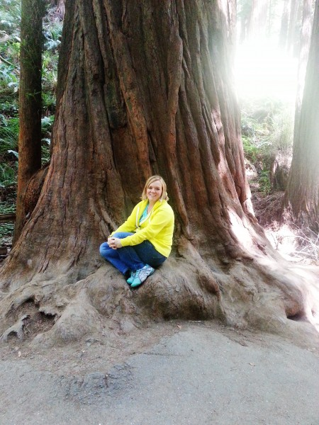 Where to see BIG trees