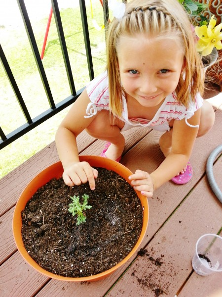 How to plant a new tree from seedling